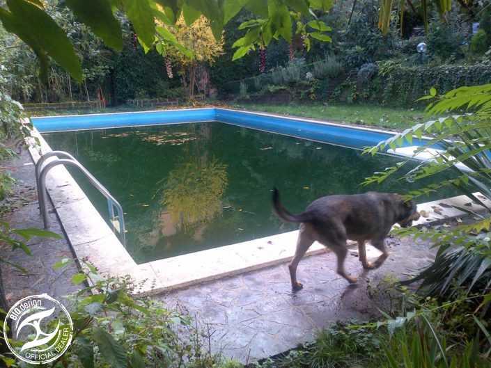 Ristrutturazione di piscine tradizionali - Foto 1 - Prima